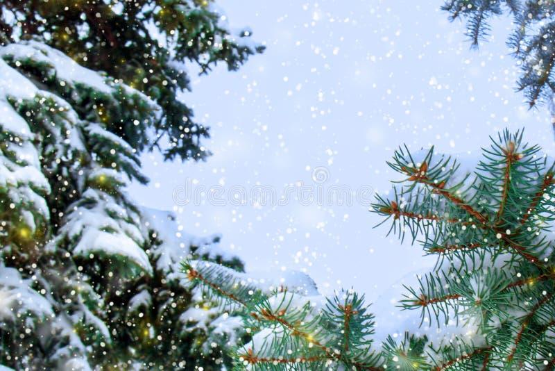 Concept de beauté d'hiver dans la forêt neigeuse de sapin photo libre de droits