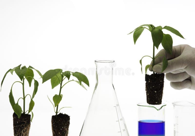Concept de biotechnologie images libres de droits
