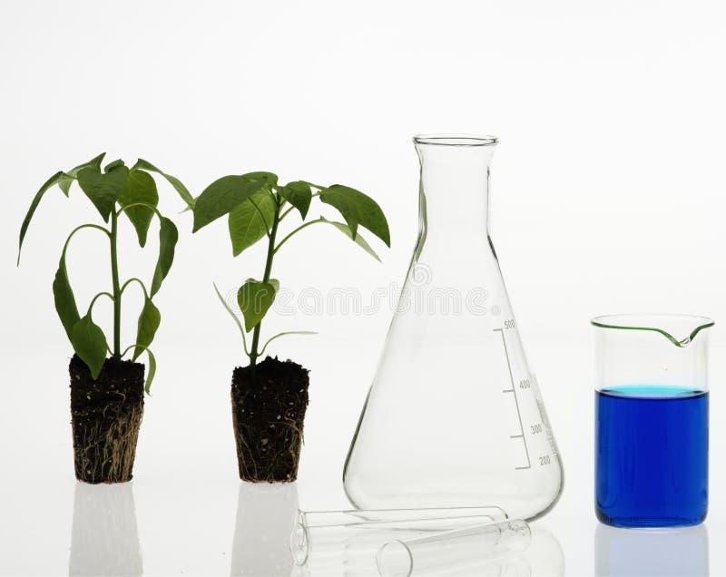 Concept de biotechnologie photographie stock