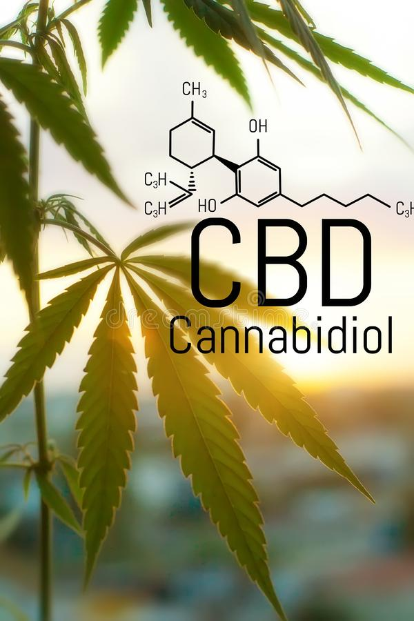 Concept de cannabis comme rem?de universel, huile pharmaceutique de CBD Concept d'employer la marijuana pour des buts m?dicinaux  photos libres de droits