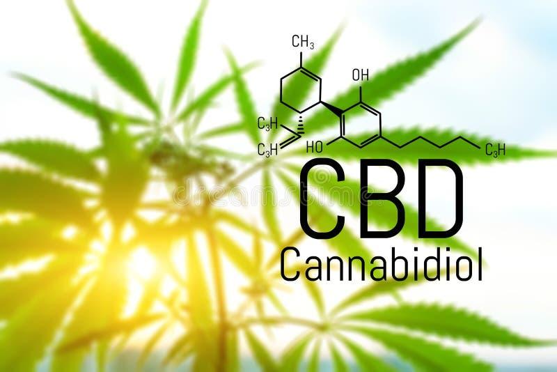 Concept de cannabis comme rem?de universel, huile pharmaceutique de CBD Concept d'employer la marijuana pour des buts m?dicinaux  photographie stock