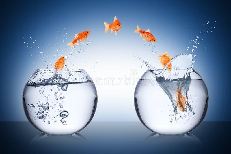 Concept de changement de poissons images stock