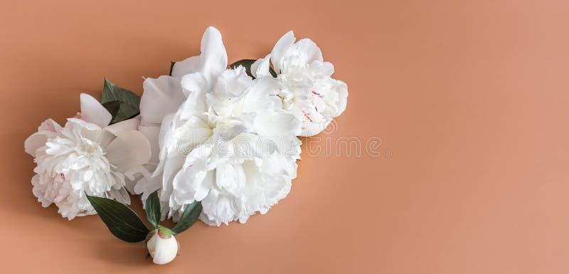 Concept de construction - vue sup?rieure du groupe de belles fleurs sur le fond color? avec l'espace de copie photo libre de droits