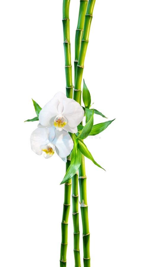 Concept de couples - bambou et orchidée image libre de droits