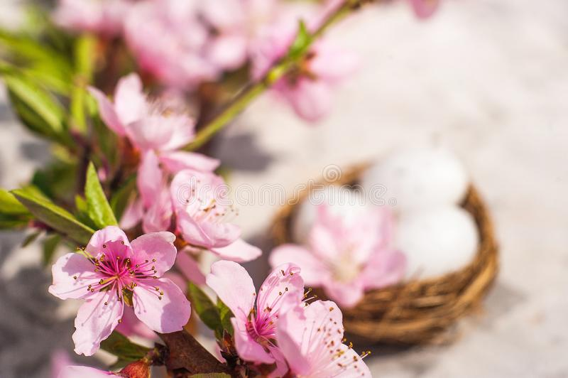 Concept de fleur de ressort Concept de P?ques, oeufs dans un nid, plan rapproch? d'arbre de floraison et espace de copie Texture  photographie stock