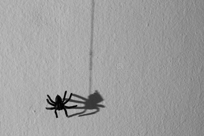 Concept de fond de Halloween Hangin graphique d'ombre d'araignée noire photo stock