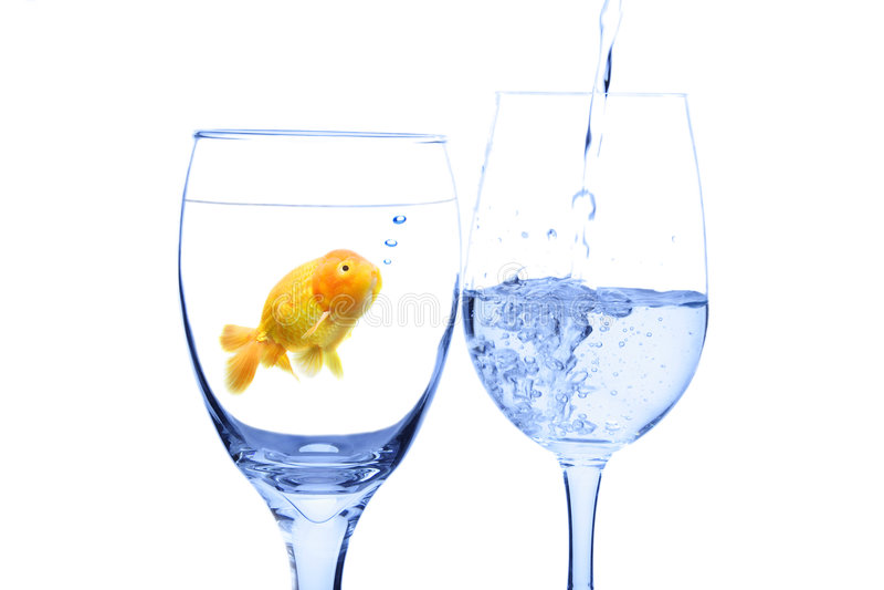 Concept de Goldfish photos libres de droits