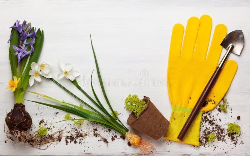 Concept de jardinage avec des fleurs de ressort et des outils de jardin photographie stock libre de droits