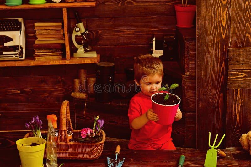 Concept de jardinier Petit jardinier Enfant de jardinier avec l'usine mise en pot Comme le jardin élève ainsi fait le jardinier photo libre de droits