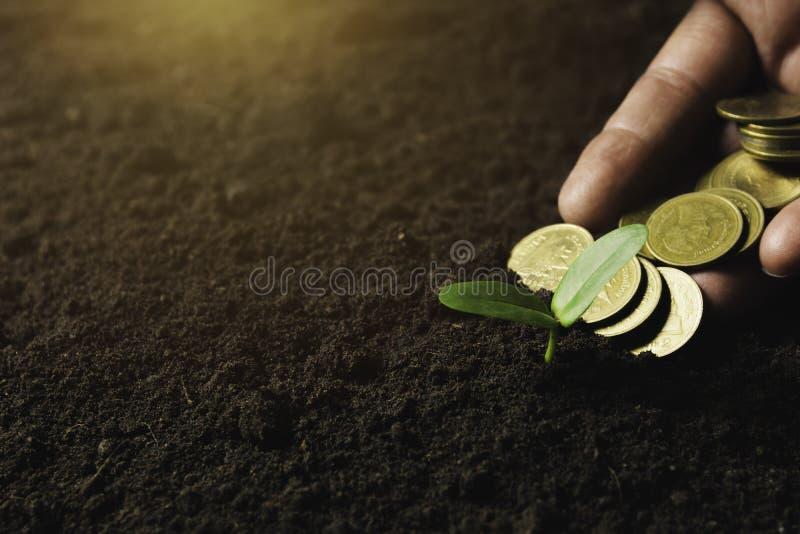 Concept de jeune plante par la main humaine tenant des pièces de monnaie d'argent avec le jeune arbre sur le fond de nature images stock