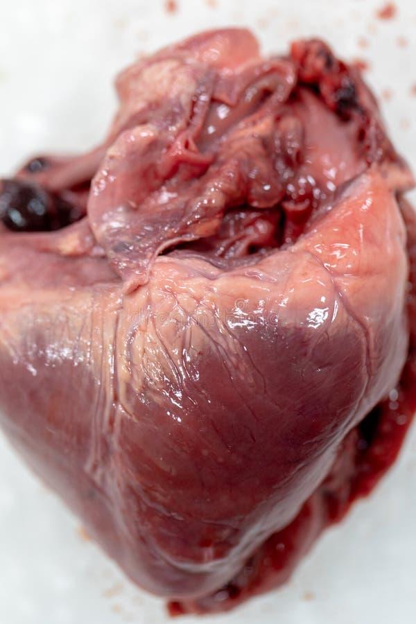 Concept de l'anatomie d'éducation et de la physiologie du coeur image libre de droits