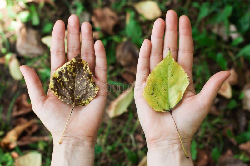 Concept de la protection de la nature, environnement, écologie, eco images libres de droits