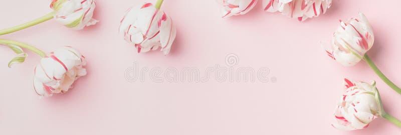 Concept de matin de ressort Plat-configuration des fleurs au-dessus du fond rose-clair, vue supérieure avec l'espace pour votre t photographie stock libre de droits