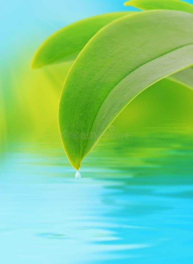 Concept de nature avec la lame et le waterdrop photographie stock