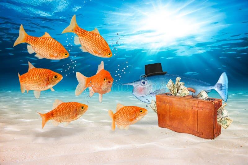 Concept de poissons de fraude photo libre de droits