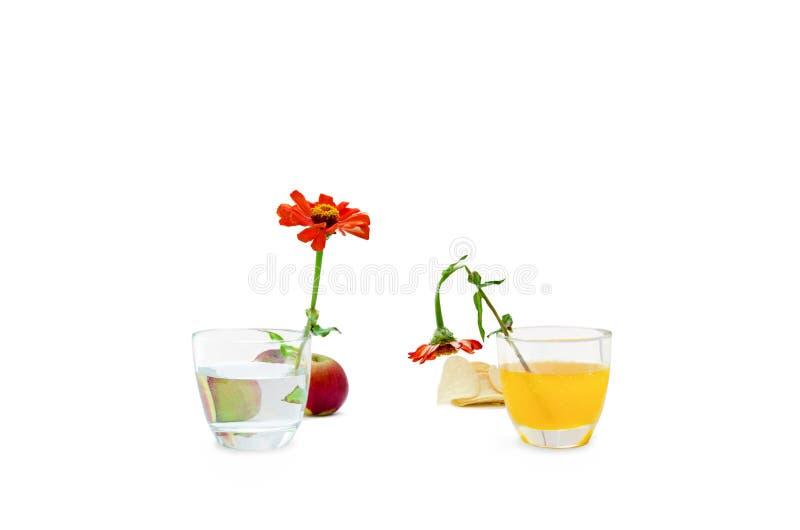 Concept de sain contre la nourriture malsaine sur le fond blanc photos stock