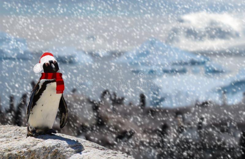 Concept de saison d'hiver un pingouin drôle se tenant sur une roche utilisant un chapeau et une écharpe du père noël tout en neig photographie stock