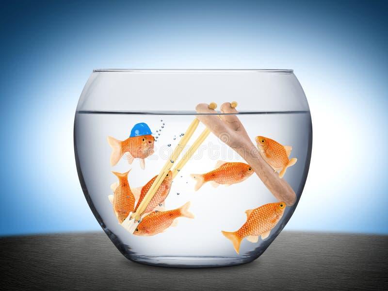 Concept de travail d'équipe de poissons photographie stock libre de droits