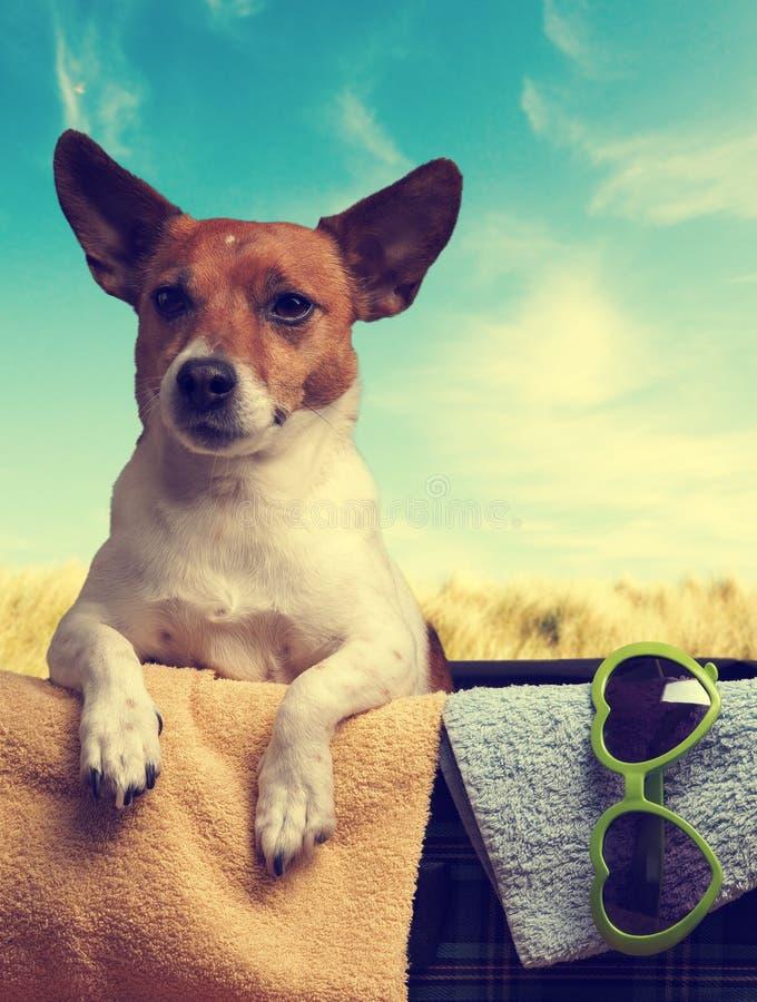 Concept de voyage avec Jack Russell Terrier images libres de droits