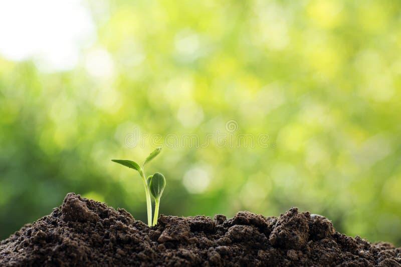 Concept du monde d'économies d'environnement d'écologie de la terre de Csr images stock
