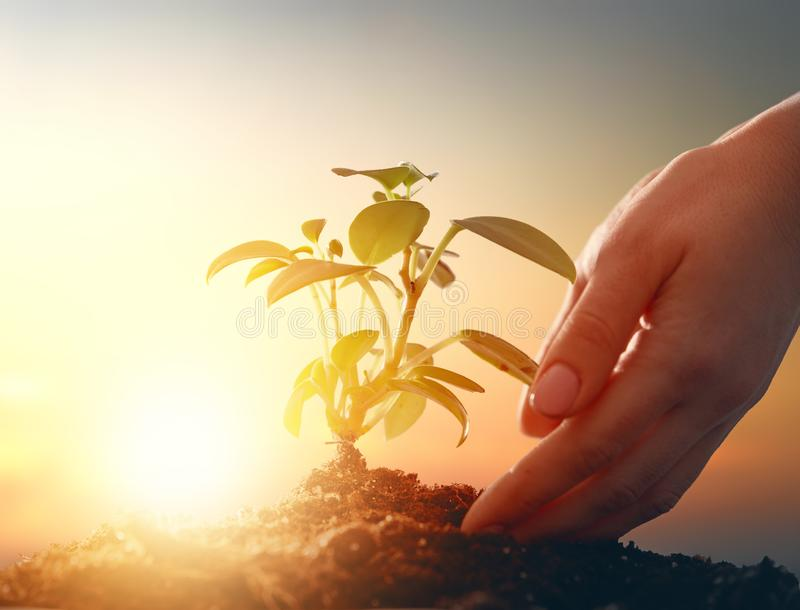 Concept of earth day. Person is holding in hands green sprout. Spring, nature, eco and care royalty free stock images