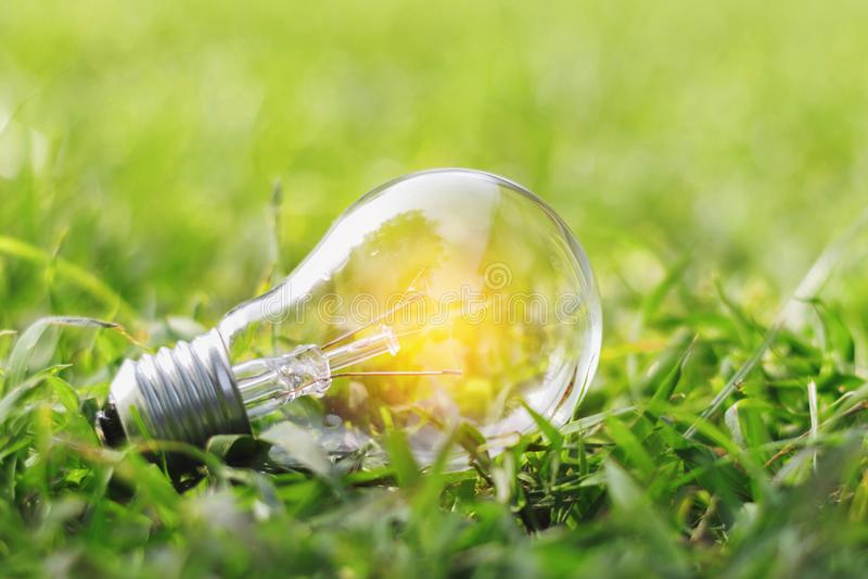 Concept eco light bulb on green grass with idea saving power ene. Rgy stock image
