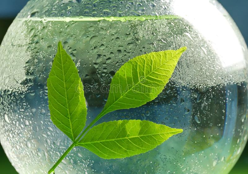 the concept of ecology. a branch of green leaves and water in a royalty free stock images