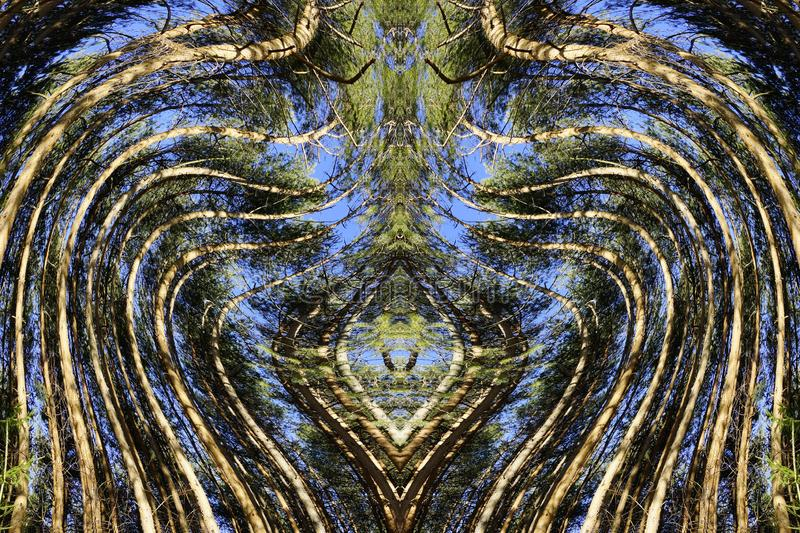 Concept of ecology. heart of pine forest royalty free stock images