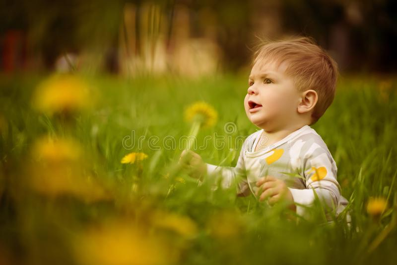 Portrait of adorable baby playing outdoor in the sunny dandelions field. Concept: family values. Portrait of adorable innocent funny brown-eyed baby playing royalty free stock photo