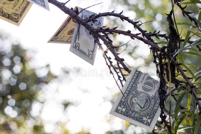 Concept financieel succes Het geld groeit op bomen stock fotografie