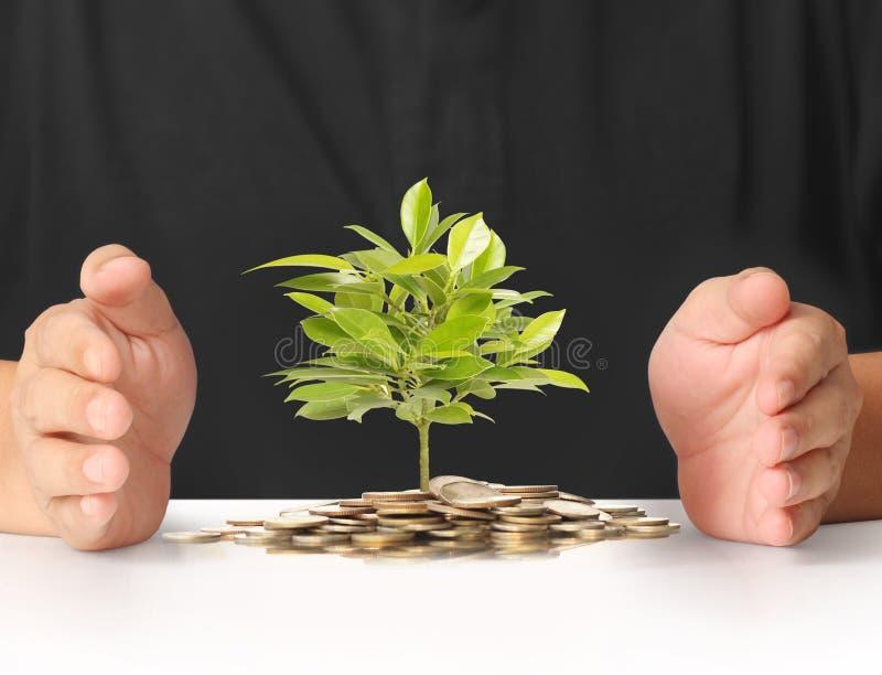 Concept geldinstallatie het groeien van muntstukken royalty-vrije stock afbeelding