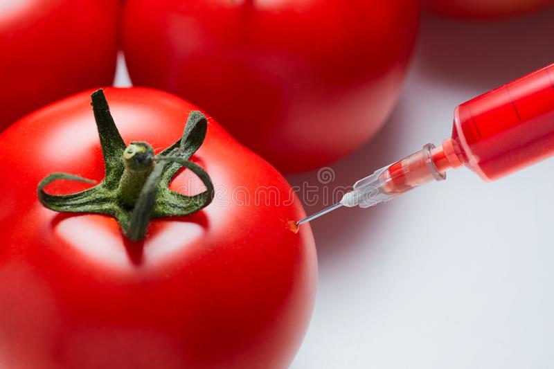 Concept of genetic modification of a tomato royalty free stock image