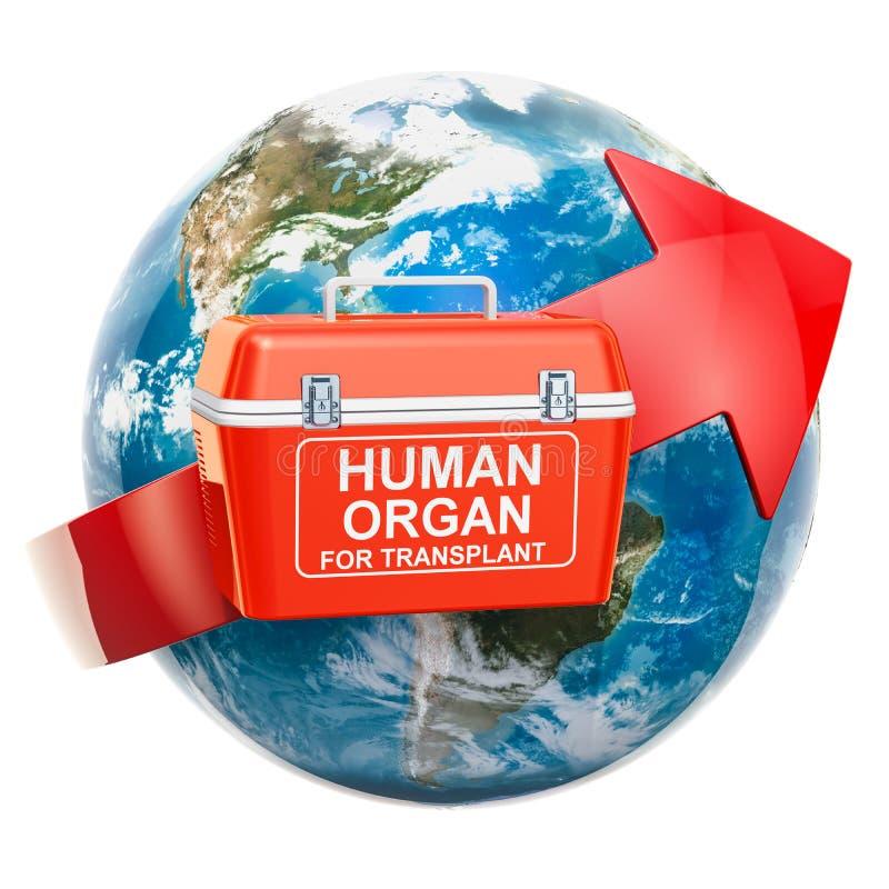 Concept global d'organes humains de donation et de transplantation Portab illustration stock