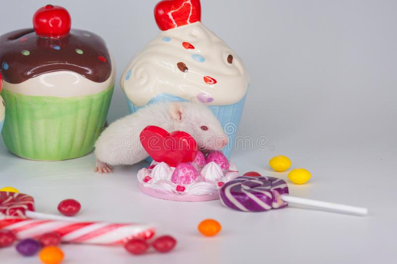 The concept of greed. White rat with lots of sweets royalty free stock photo