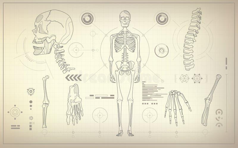Skeleton Blueprint stock illustration