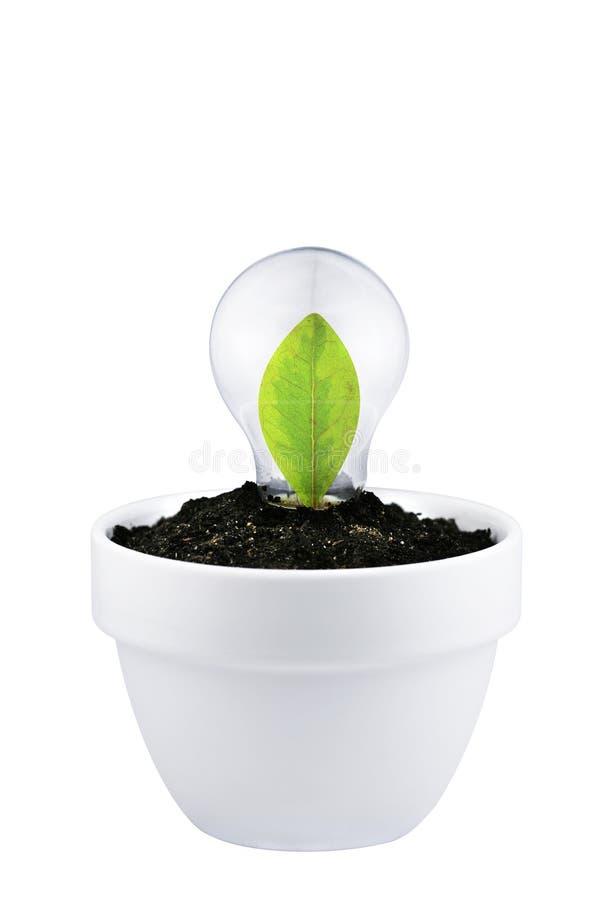 Concept het kweken van groene ideeën die op wit worden geïsoleerde stock foto