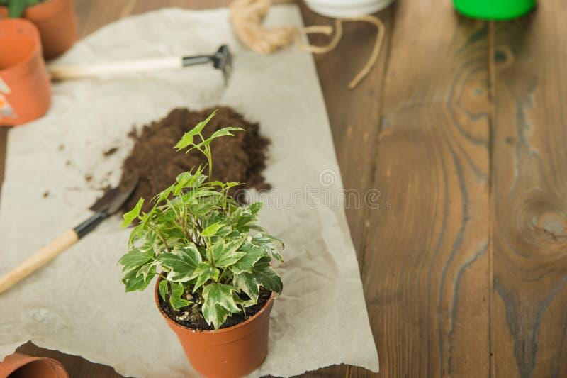 Concept het overplanten van installaties Het tuinieren hark en installaties in potten op verfomfaaid ambachtdocument met exemplaa stock foto