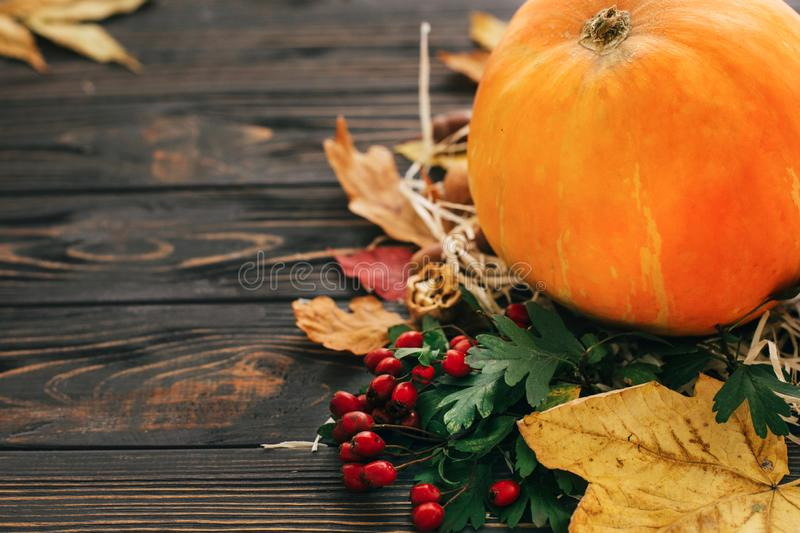 Concept heureux de thanksgiving Belle composition de potiron, Au images stock