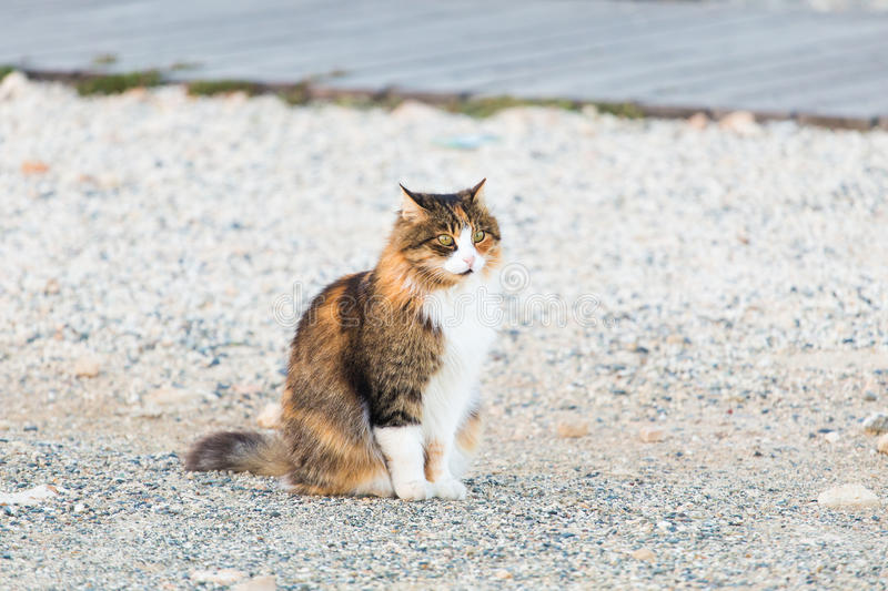 Concept of homeless animals - Stray cat on the street.  royalty free stock photo