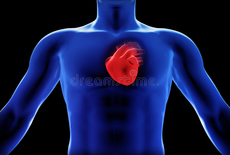 Concept humain de rayon X de coeur illustration stock