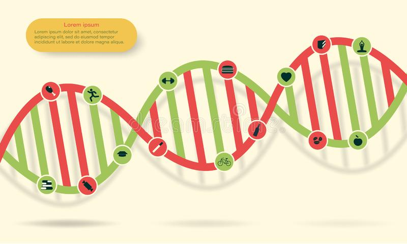 The concept of human DNA change under the influence of good and bad habits. Icons of development and degradation. Vector illustration vector illustration