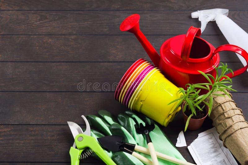 Concept immobile de jardinage de la vie avec la boîte d'arrosage rouge, les pots en plastique colorés, les gants, succulent, pulv image stock