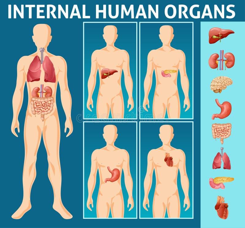 Concept interne de pièces de corps humain de bande dessinée illustration stock