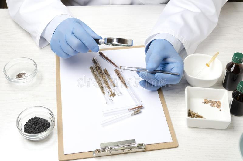 Concept of laboratory researching, cheking quality of seeds.Working process on the lab table stock photos