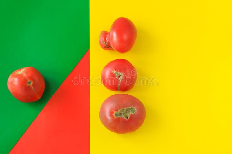 Concept laid de nourriture, tomates déformées sur le fond rouge, vert et jaune, l'espace de copie, image géométrique créative photographie stock libre de droits