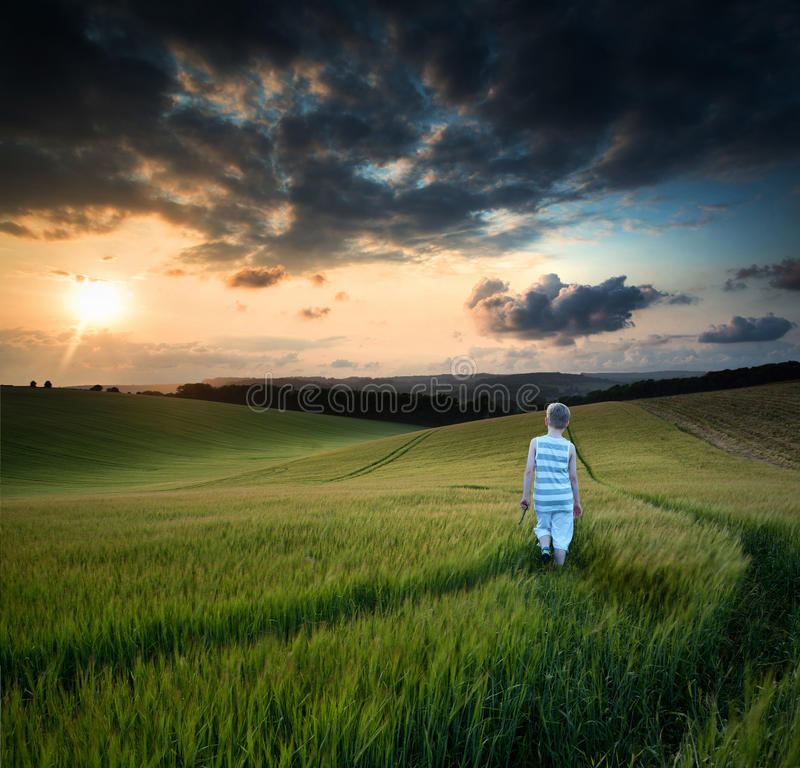 Concept landscape young boy walking through field at sunset in S stock images