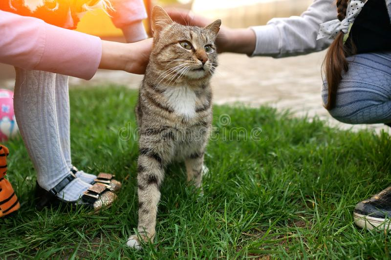 The concept of love for animals, children`s hands stroking the cat close-up stock images