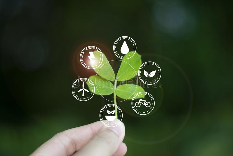 Concept of love, ecology world To sustainability stock photos