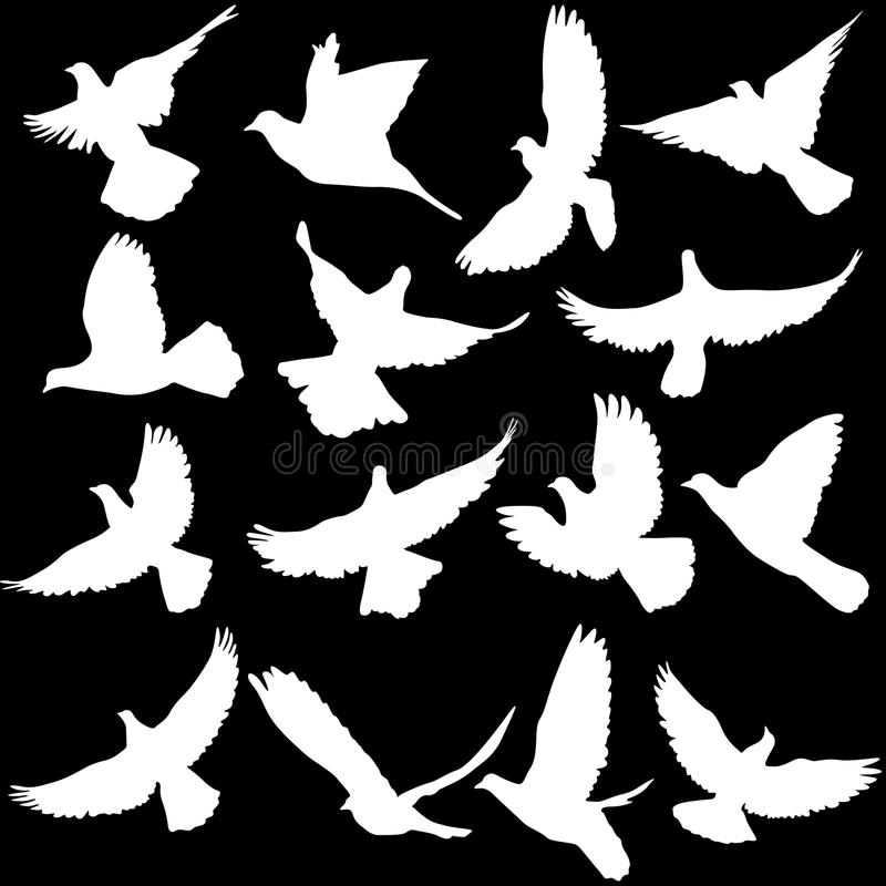 Concept of love or peace. Set of silhouettes of doves. Vector il stock illustration