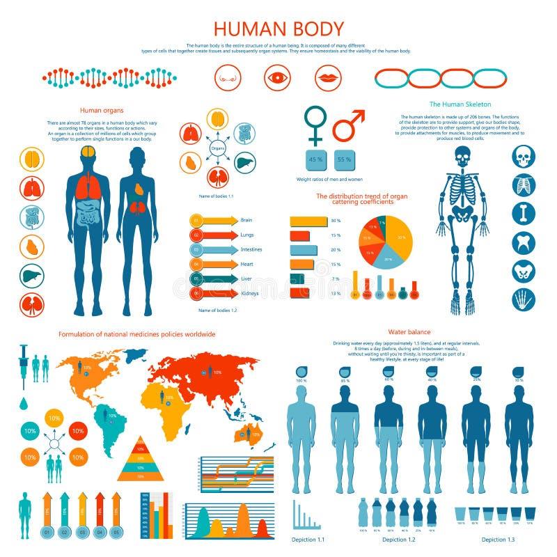 Concept Menselijk Dekkleur Infographic-Beeldverhaal royalty-vrije illustratie